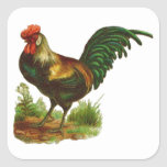 Rooster Square Sticker