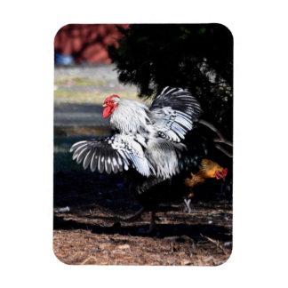 Rooster Struttin IT Rectangular Photo Magnet