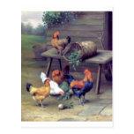 Rooster Turnip Basket Hens Post Cards