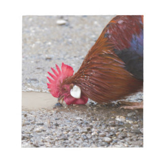roosters in the farm notepad