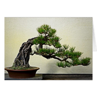 Root Over Rock Pine Bonsai Tree Card