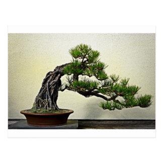 Root Over Rock Pine Bonsai Tree Postcard