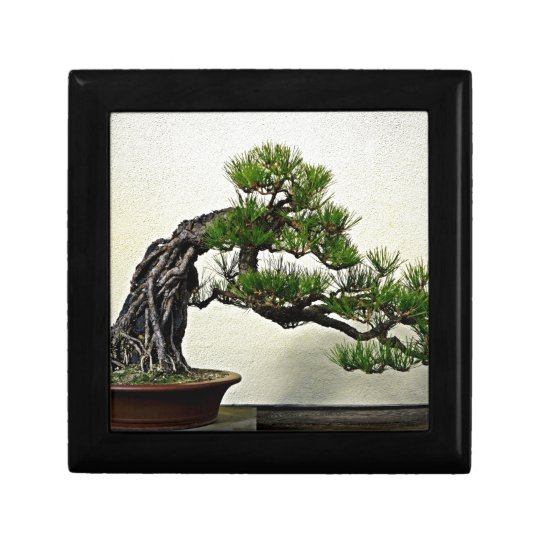 Root Over Rock Pine Bonsai Tree Small Square