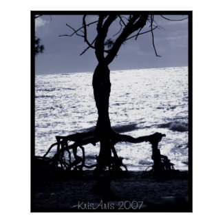 Rooted Posters