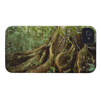 Roots and Trunk of Sloanea Tree Case-Mate iPhone 4 Case
