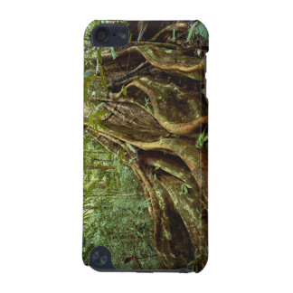 Roots and Trunk of Sloanea Tree iPod Touch (5th Generation) Cases