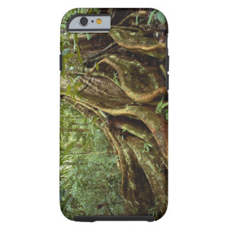 Roots and Trunk of Sloanea Tree Tough iPhone 6 Case
