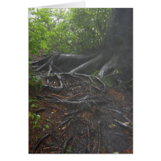 Roots at the Appalachian Trail Card