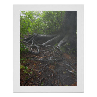 Roots at the Appalachian Trail Poster