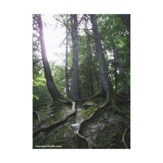 Roots Canvas Prints