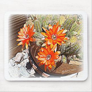 Rope Cactus Blooms Mousepads
