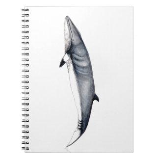 Rorcual aliblanco notebooks