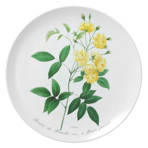 Rosa banksii (syn.R banksiae) Party Plate