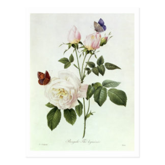 Rosa: Bengale the Hymenes, from 'Les Roses' Postcard