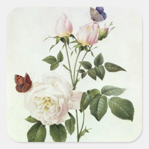 Rosa: Bengale the Hymenes Square Sticker