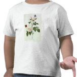 Rosa: Bengale the Hymenes Tees