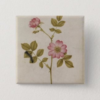 Rosa Canina - Dogrose and Caterpillar (pencil & w/ 15 Cm Square Badge