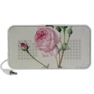 Rosa Centifolia Bullata Travelling Speakers