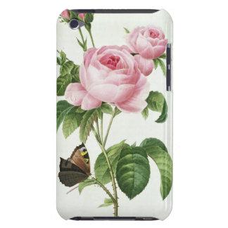 Rosa Centifolia iPod Touch Cases