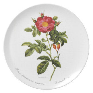 Rosa damascena coccinea plates