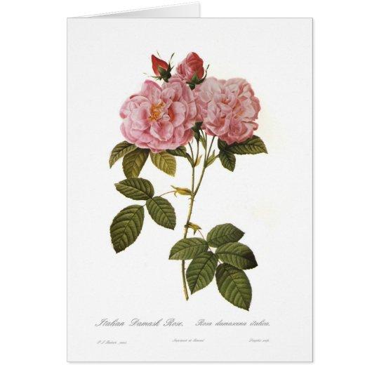 Rosa damascena italica card