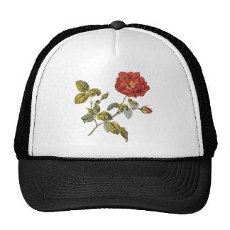 Rosa Gallica Beautiful Red Antique Rose Vintage Hat
