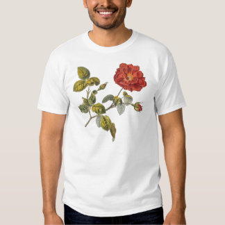 Rosa Gallica Beautiful Red Antique Vintage Rose Tshirt