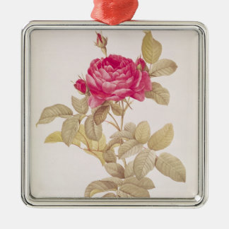 Rosa Gallica Pontiana, from 'Les Roses' Christmas Ornament