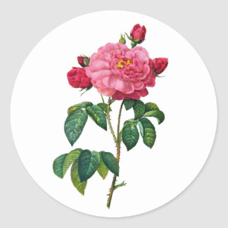 Rosa Gallica - Red Rose by Redoute Round Sticker