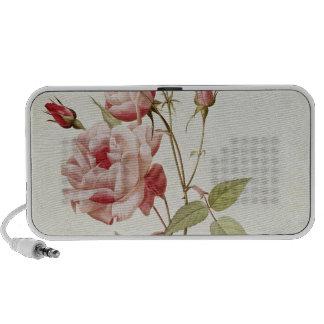 Rosa Indica Vulgaris, from 'Les Roses' iPhone Speakers