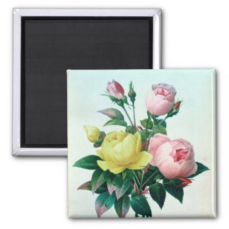 Rosa Lutea and Rosa Indica Square Magnet