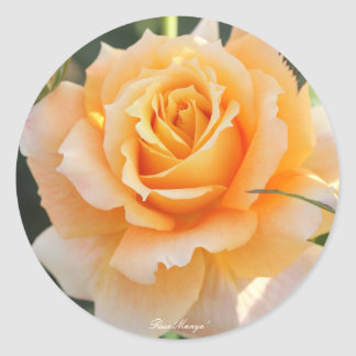 Rosa ` Manyo' (ten thousand leaves) Round Sticker