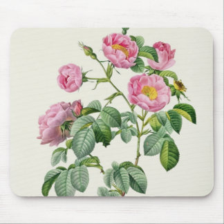 Rosa Mollissima, from 'Les Roses' Mouse Mat