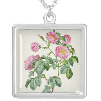 Rosa Mollissima, from 'Les Roses' Silver Plated Necklace