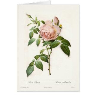 Rosa odorata greeting card