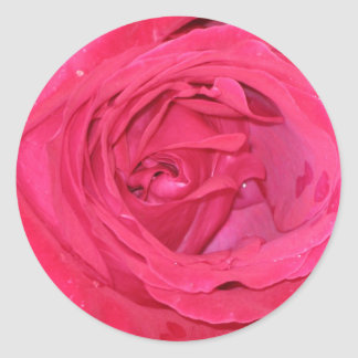 Rosa rosae classic round sticker