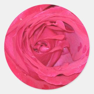 Rosa rosae round sticker