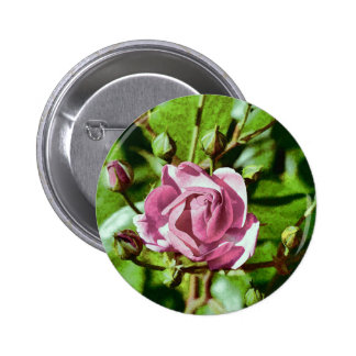 Rosa Rose, Nature 6 Cm Round Badge