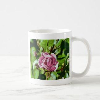 Rosa Rose, Nature Basic White Mug