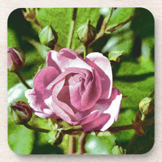 Rosa Rose, Nature Coasters