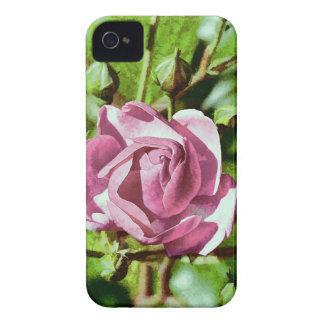Rosa Rose, Nature iPhone 4 Case-Mate Cases