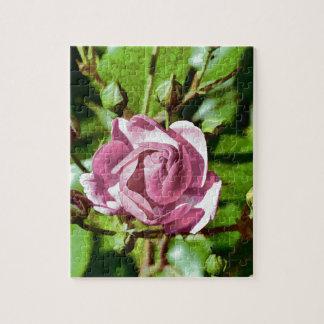 Rosa Rose, Nature Jigsaw Puzzle