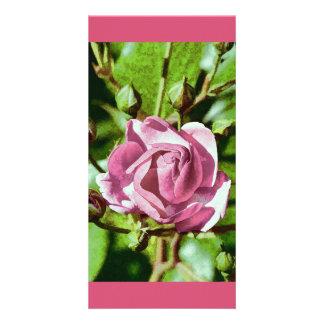 Rosa Rose, Nature Photo Greeting Card