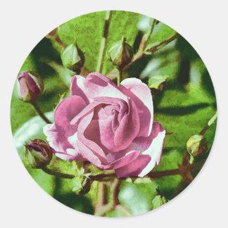 Rosa Rose, Nature Round Sticker