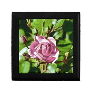 Rosa Rose, Nature Small Square Gift Box