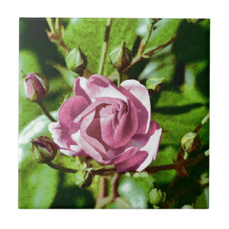 Rosa Rose, Nature Small Square Tile