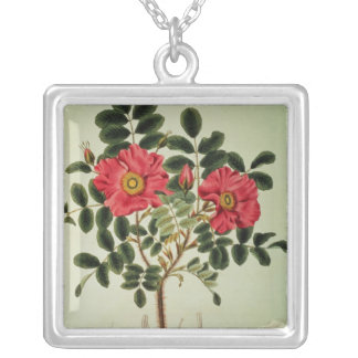 Rosa rugosa, from 'Flora Japonica' Silver Plated Necklace