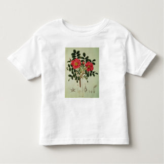 Rosa rugosa, from 'Flora Japonica' Toddler T-Shirt