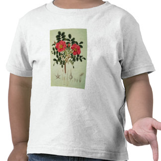 Rosa rugosa, from 'Flora Japonica' Shirt