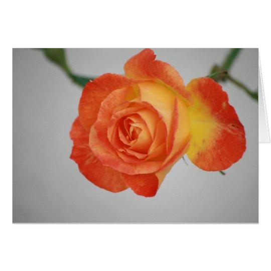 Rose a Fire Card